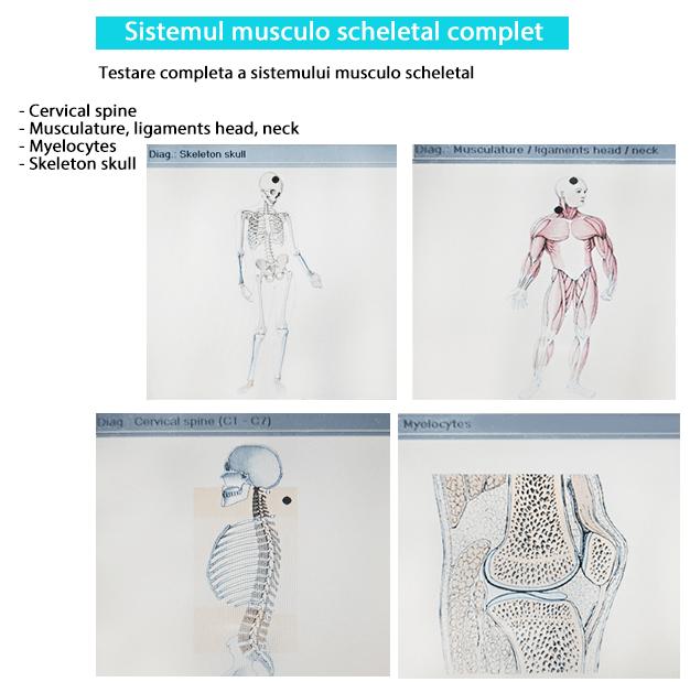 Sistemul musculo scheletal biorezonanta-min