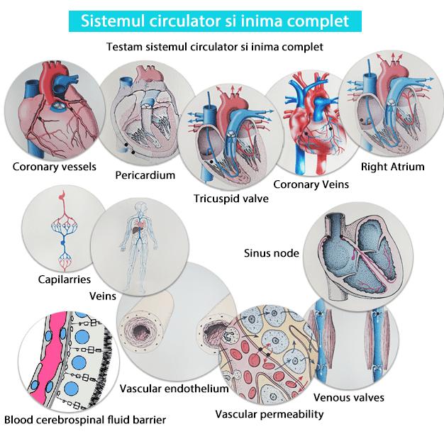 Testare - Sistemul circulator si inima complet biorezonanta-min