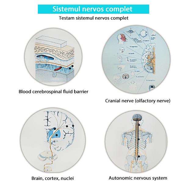Testare biorezonanta - Sistemul nervos complet-min