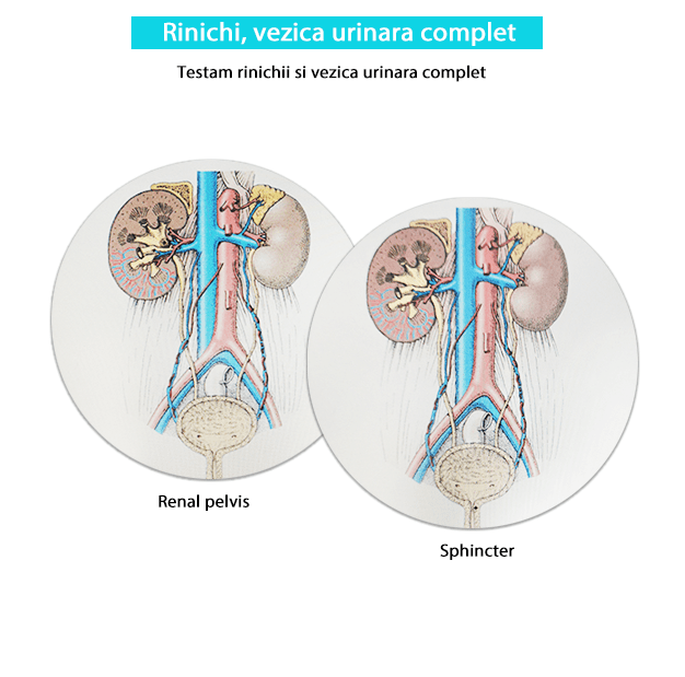 Testare rinichi si vezica urinara complet-min